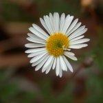 زهور Size:21.00 Kb Dim: 600 x 450