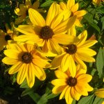 زهور Size:89.50 Kb Dim: 600 x 449