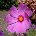 زهور Size:38.80 Kb Dim: 600 x 450