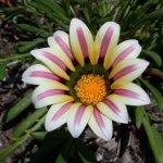 زهور Size:43.00 Kb Dim: 600 x 450