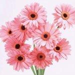 زهور Size:78.80 Kb Dim: 800 x 600