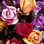 زهور Size:110.70 Kb Dim: 640 x 800