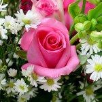 زهور Size:107.40 Kb Dim: 600 x 450