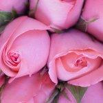 زهور Size:71.30 Kb Dim: 600 x 450