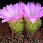 زهور Size:74.40 Kb Dim: 600 x 449