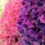زهور Size:78.40 Kb Dim: 600 x 450
