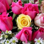 زهور Size:110.60 Kb Dim: 600 x 450
