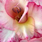 زهور Size:96.10 Kb Dim: 678 x 599