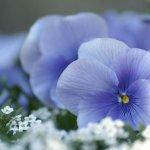 زهور Size:34.00 Kb Dim: 700 x 525