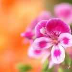 أزهار Size:31.10 Kb Dim: 700 x 525