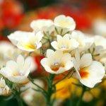أزهار Size:40.90 Kb Dim: 700 x 525