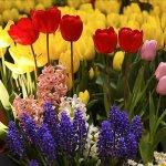 أزهار Size:91.90 Kb Dim: 700 x 525