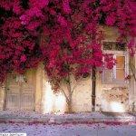 ورود وزهور14