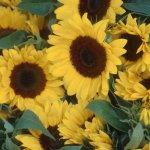 زهور10