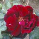 احمر Size:197.90 Kb Dim: 1152 x 864
