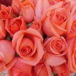 باقة زهور