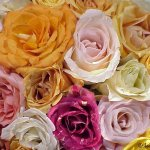 زهور ملونة Size:81.40 Kb Dim: 800 x 600