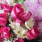زهور متنوعة Size:96.60 Kb Dim: 800 x 600