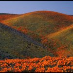 جبال من الورود Size:81.20 Kb Dim: 640 x 427