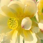 اجمل الازهار