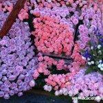 مهرجان الورد في جمال الورد3