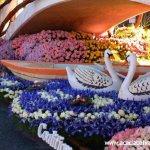 مهرجان الورد في جمال الورد6