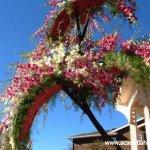 مهرجان الورد في جمال الورد8