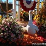 مهرجان الورد في جمال الورد10