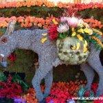 مهرجان الورد في جمال الورد13
