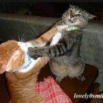 قتال عنيف