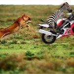 دعاية دراجة هوندا Size:128.40 Kb Dim: 795 x 599