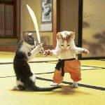 قطط النينجا
