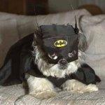 الكلب الخفاش