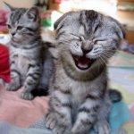 ضحكة قط
