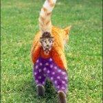 قطة ملونة Size:42.60 Kb Dim: 324 x 480