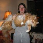funny  cat Size:33.00 Kb Dim: 540 x 405