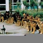 القط الشجاع