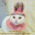 آخر موضات القطط Size:17.80 Kb Dim: 350 x 343