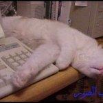 حتى القطط Size:29.70 Kb Dim: 500 x 330