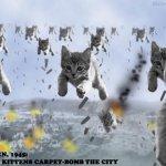 حرب القطط