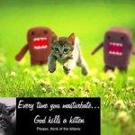 هجوم على قط