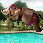 حوض سباحة Size:41.00 Kb Dim: 600 x 450