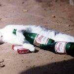 القطة السكرانة