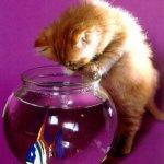 قطة وحوض