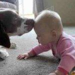 اطفال مع حيوانات2