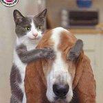 قطة وكلب Size:12.3 Kb Dim: 300 x 366