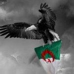 الجزائر3