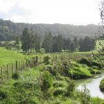 Waitomo Caves Size:55.90 Kb Dim: 560 x 420