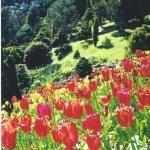 Wellington Botanical gardens Size:57.70 Kb Dim: 315 x 500