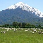 نيوزيلندا..جنة الأرض..!!2 Size:70.60 Kb Dim: 717 x 538